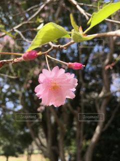 花の写真・画像素材[517188]