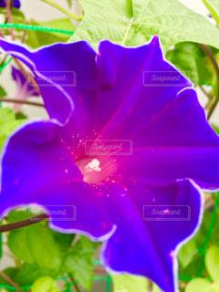 花の写真・画像素材[672508]