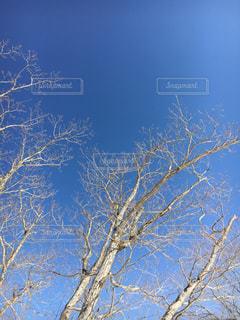 雪の木の写真・画像素材[1036648]