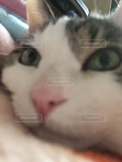 No.514502 猫