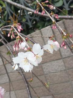 春の写真・画像素材[523431]