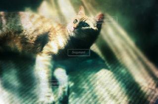 地面に横たわる猫の写真・画像素材[2370546]