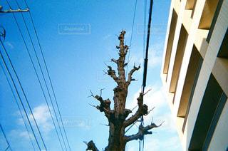 電柱のクローズアップの写真・画像素材[2370552]