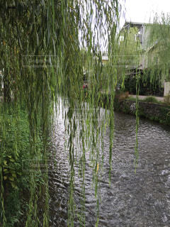 京都の写真・画像素材[515130]