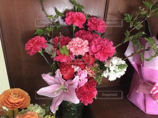 花の写真・画像素材[515213]