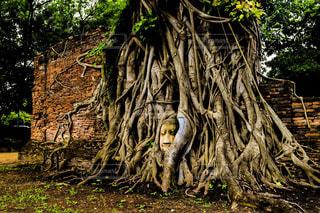 森林の写真・画像素材[648774]