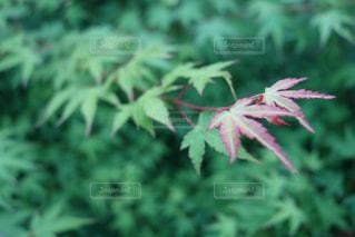 自然の写真・画像素材[517017]