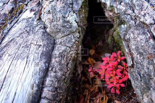 自然の写真・画像素材[517347]