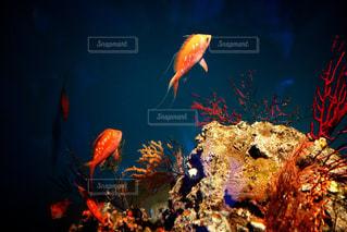 水の中の魚の群れ - No.770216