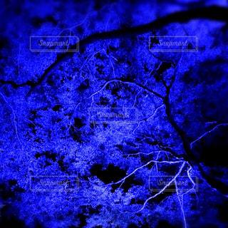青の木の写真・画像素材[1513820]