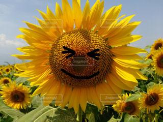 花の写真・画像素材[521400]