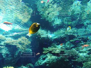 魚 - No.602976