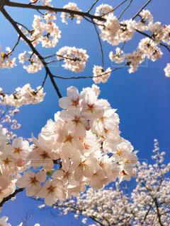 近くの花のアップの写真・画像素材[1148344]
