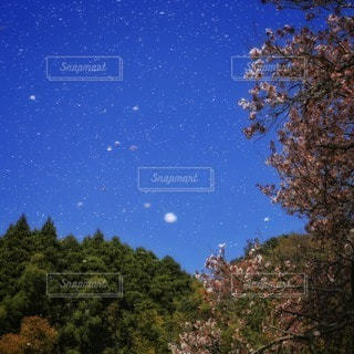自然の写真・画像素材[11053]