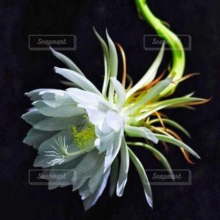 花の写真・画像素材[11089]