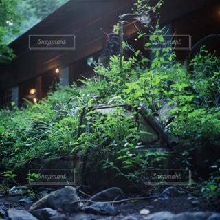カフェの写真・画像素材[11263]