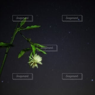 自然の写真・画像素材[11540]