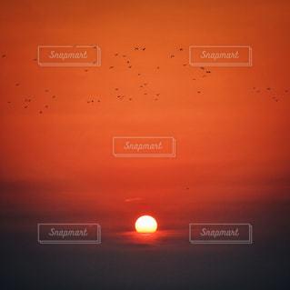 夜明けの羽ばたきの写真・画像素材[2182855]