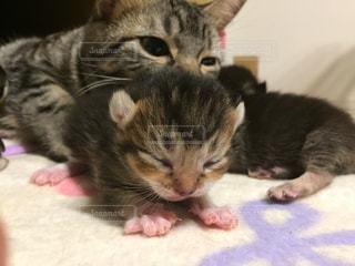 子猫 - No.516634