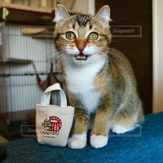 猫 - No.516660