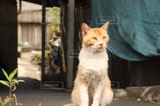 野良猫と路地の写真・画像素材[523567]