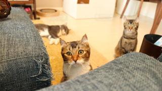 猫 - No.606054