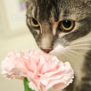 お花をくんくんの写真・画像素材[606072]