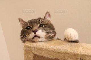 猫 - No.669938