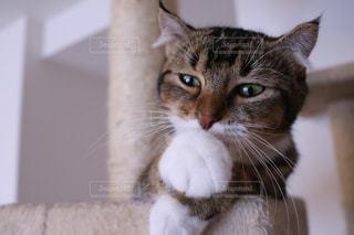 猫 - No.691082