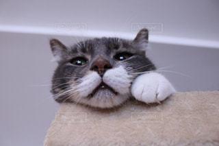 猫 - No.691084