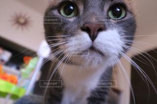 近くにカメラを見て猫のアップ - No.717426