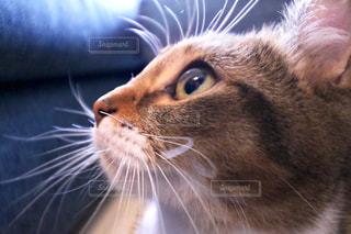 近くに猫のアップの写真・画像素材[717427]