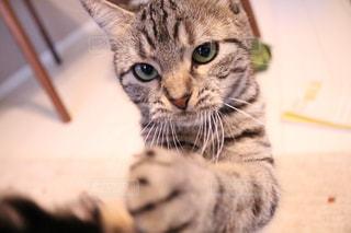 横になって、カメラを見ている猫 - No.734522