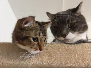 横になって、カメラを見ている猫 - No.744193