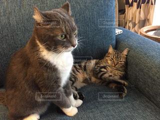 椅子に座って猫 - No.744195