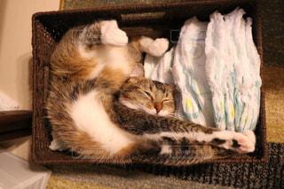 ベッドの上で横になっている猫 - No.744197