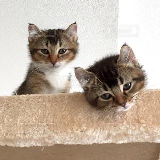 横になって、カメラを見ている猫 - No.744227