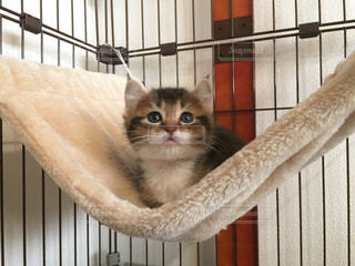 フェンスの横に座っている猫の写真・画像素材[752726]