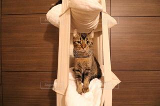 テーブルの上に座って猫 - No.757563