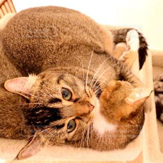 地面に横になっている猫の写真・画像素材[780948]
