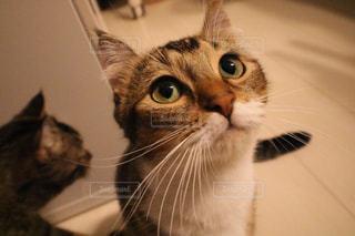 カメラを見ている猫 - No.780951