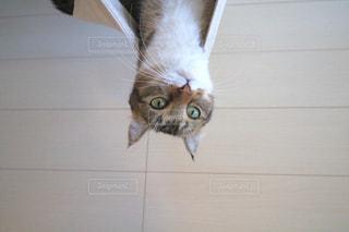 猫 - No.832805
