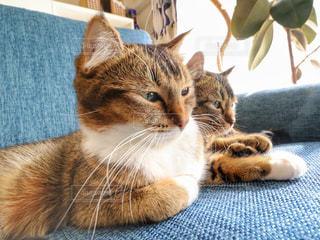 ソファに座って猫の写真・画像素材[886795]