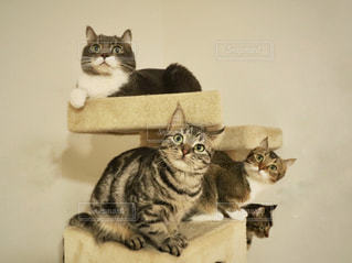 テーブルの上に座って猫 - No.899454