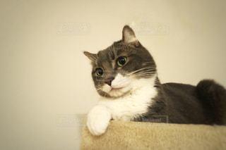 白い面の上に座って猫 - No.899455