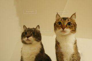 カメラにポーズを鏡の前で座っている猫の写真・画像素材[899456]