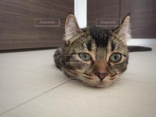 カメラを見ている猫の写真・画像素材[899469]