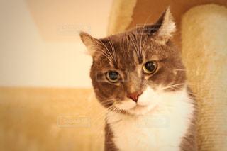 カメラを見ている猫 - No.899479