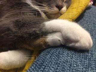 近くに毛布の上に横になっている猫のアップの写真・画像素材[899624]