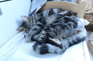 ベッドの上で横になっている猫の写真・画像素材[902071]